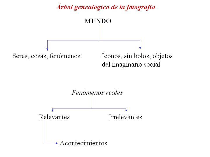 Árbol genealógico de la fotografía